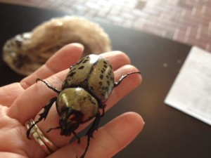 Beetles In Hand